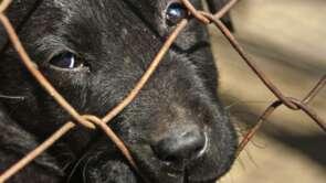Týranie zvierat a jedenie psov do 21. storočia nepatria.